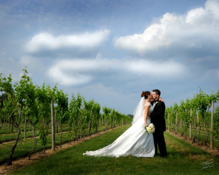 Source: http://www.tomasellowinery.com/wedding_receptions.asp via: Mazzeo Studio